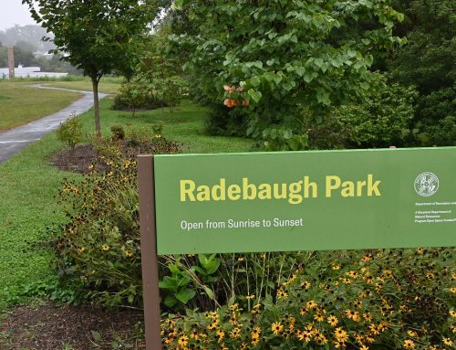 Baltimore County to plant native shade trees at Radebaugh Park in Towson, as its completion nears – Baltimore Sun